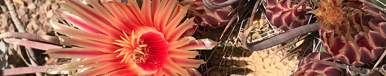 Cactus_ban